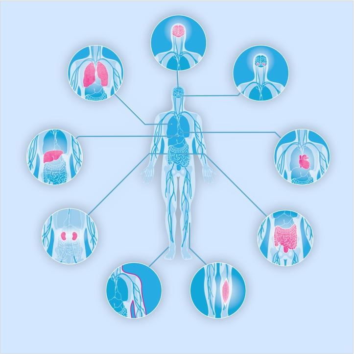 Онлайн-диагностика всего организма